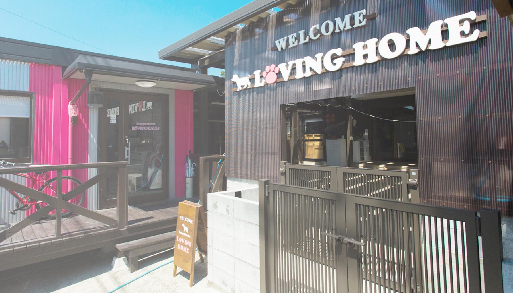 チワワ専門のブリーダー「LOVING HOME(ラビングホーム)」福岡